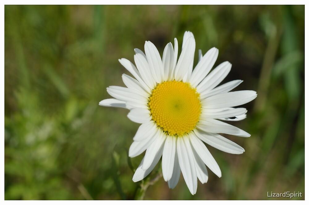 White Daisy by LizardSpirit