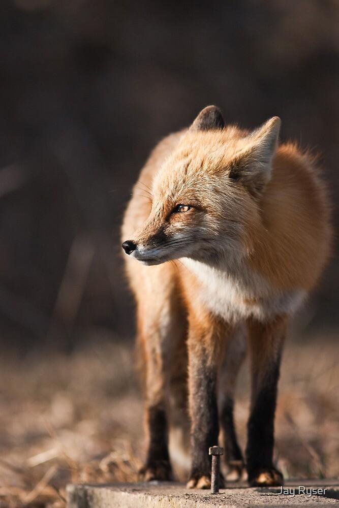 Guarding The Den by Jay Ryser