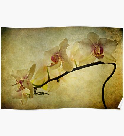 Orchid Textures Poster