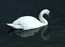 Lost Swan by Kerensa Davies