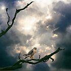 Beneath a Complex Sky. by Ken Simm