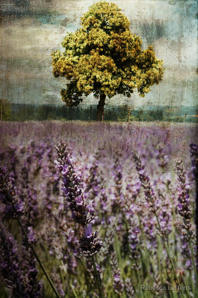 Lavender Fields by Rebecca Lefferts