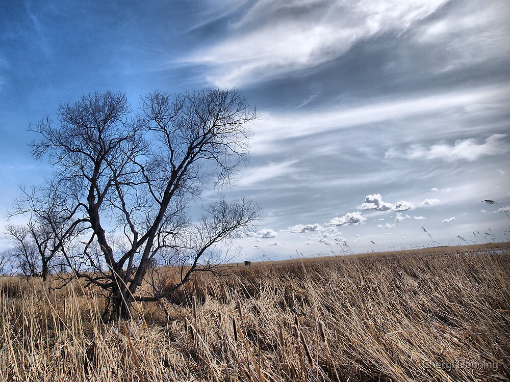 delta marsh view by Cheryl Dunning