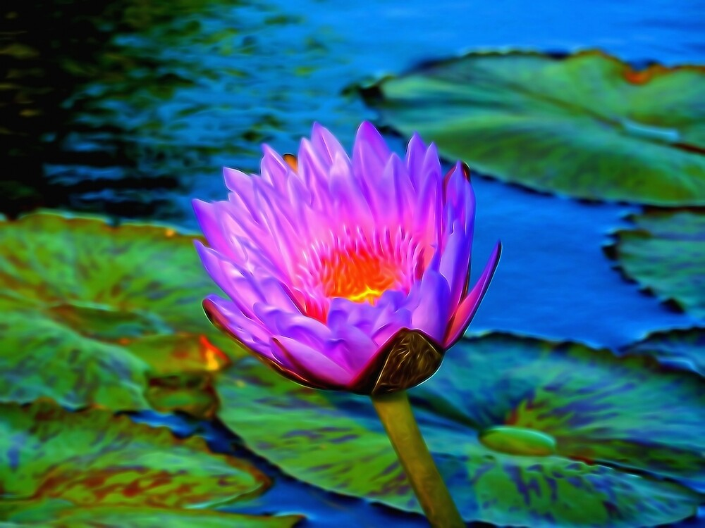 Pink Water Lily in the Pond by photosbypamela