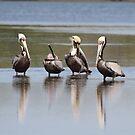 Grooming Pelicans by Karen  Moore