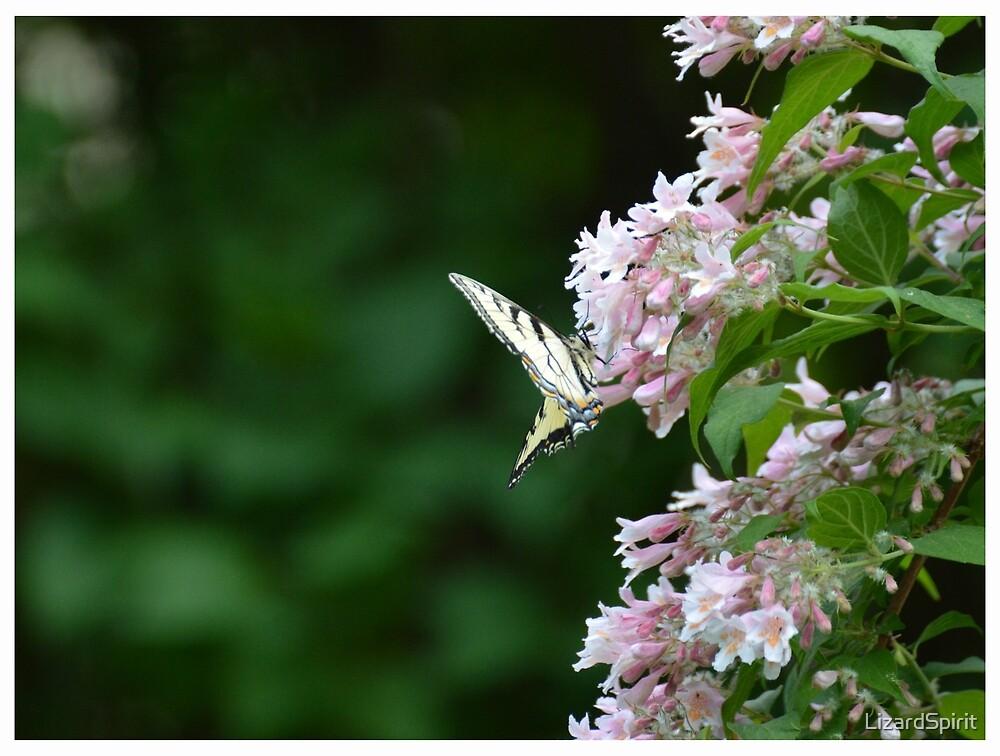 Tiger Swallowtail Butterfly on Honeysuckle by LizardSpirit