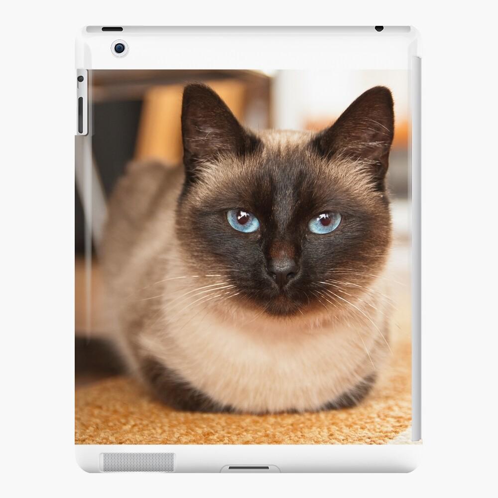 Siamesische Katze iPad-Hülle & Skin