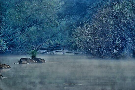 Doctors Creek Reserve by Michael Rowley