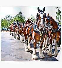 The Budweiser Clydesdales Poster