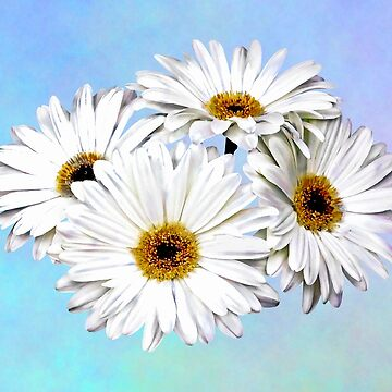 Four White Daisies by SudaP0408