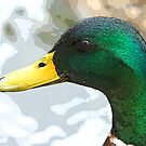 """""""Painted Duck"""" by Candler Photography"""