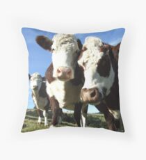 Hereford steers Throw Pillow