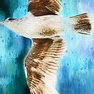 Seemöwe auf Blau von Peggy Collins