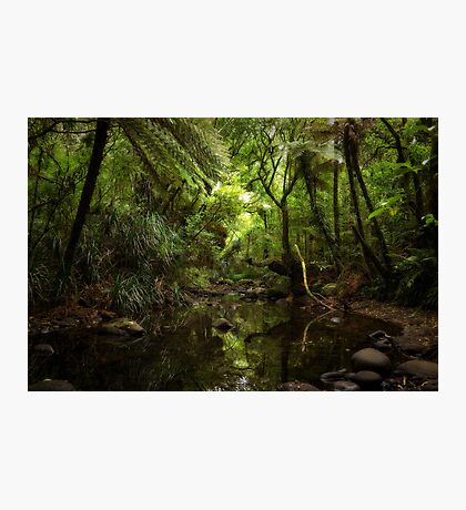 NZ Native Forest Stream Photographic Print