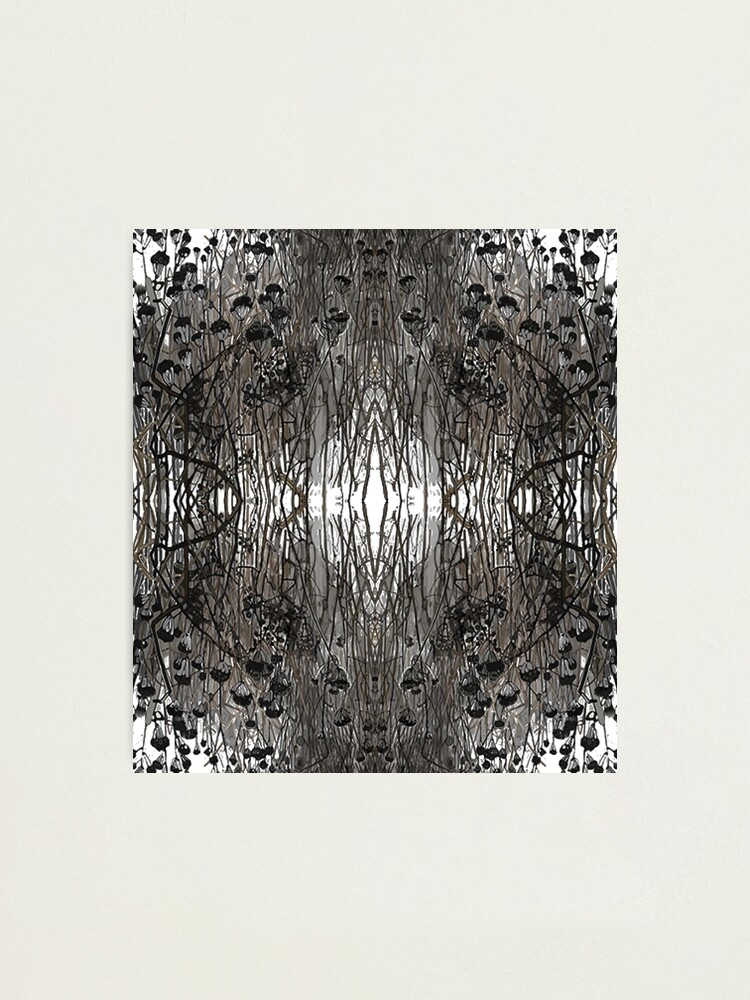 Alternate view of #Tree #Monochrome #Pattern #Design Symmetry nature tree wood old pattern dry Photographic Print
