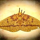 Imperial Moth by Kay Brewer