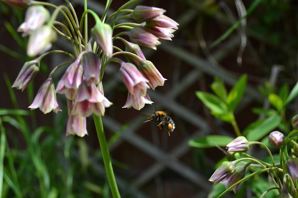 Flying Bee by CharlotteEmma