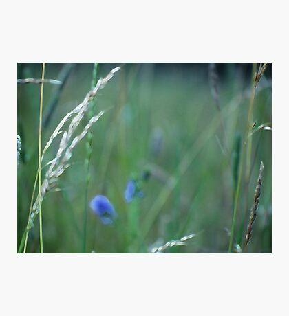 Summer Grass 13 Photographic Print