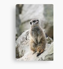 Mr Inquisitive Canvas Print