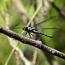 In the Blue Dragon Fly Spa by L Spittall