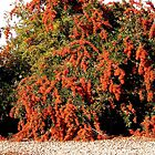 rote Beeren von Shulie1
