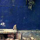 Small kitty by kintija