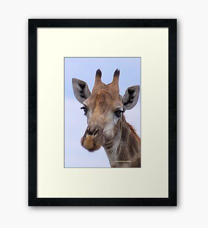 IN PORTRAIT - The Giraffe - giraffa camelopardis Framed Print