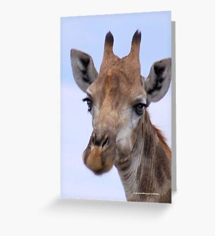 IN PORTRAIT - The Giraffe - giraffa camelopardis Greeting Card