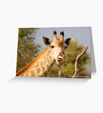 GIRAFFE – Giraffa camelopardalis - This......?  No...  it was from the previous acacia Greeting Card
