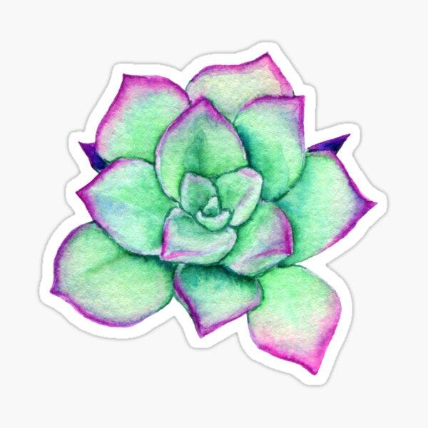 Bright Rose Watercolor Succulent Sticker