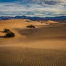 Death Valley Mesquite Dunes Sun Rise Side Light by photosbyflood