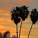 Palmy Sunrise by Chet  King