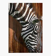 the zebra Fotodruck