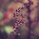 Planty Things by Sid Black