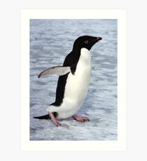 Adelie Penguin Walking on the Fast Ice Art Print