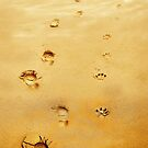 Walking the Dog - footprints by Mal Bray
