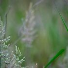 Seeding Summer Grasses by Clare Colins