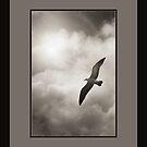 On a Wing and a Prayer by Nico  van der merwe