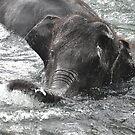 Elephant Joy by ApeArt