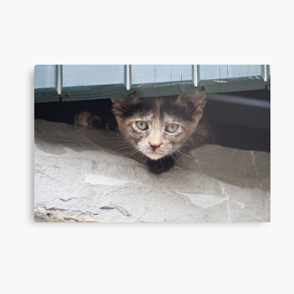 kitten at the window Metal Print