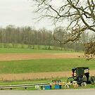 Amish Birdhouses by Bob  Perkoski