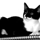 Portrait of a Black and White Nelson by TeAnne