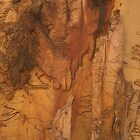Tree Bark Collection Abstract Collection # 9 by Philip Johnson