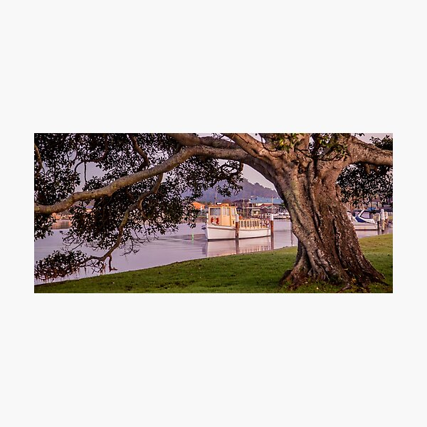 Timbers Photographic Print