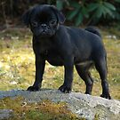 Xena the Warrior Pug by christiane