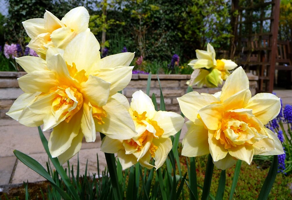 Double Spring Sunshine by Braedene