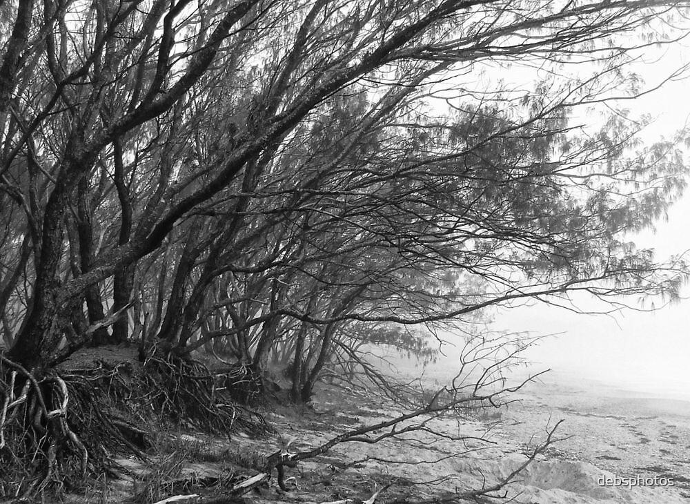 """'Oaks & Mist"""" by debsphotos"""