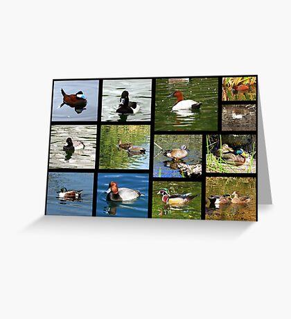 Migrating & Resident Ducks of Southwest Arizona ~ Poster Greeting Card