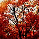 Fall Trees at Cape May NJ by schiabor
