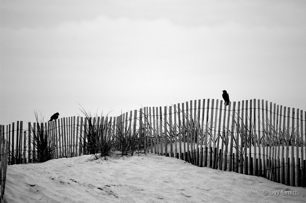 Agelaius Phoeniceus - Two Red-Winged Blackbirds On A Sand Fence | Hampton Bays, New York by © Sophie W. Smith